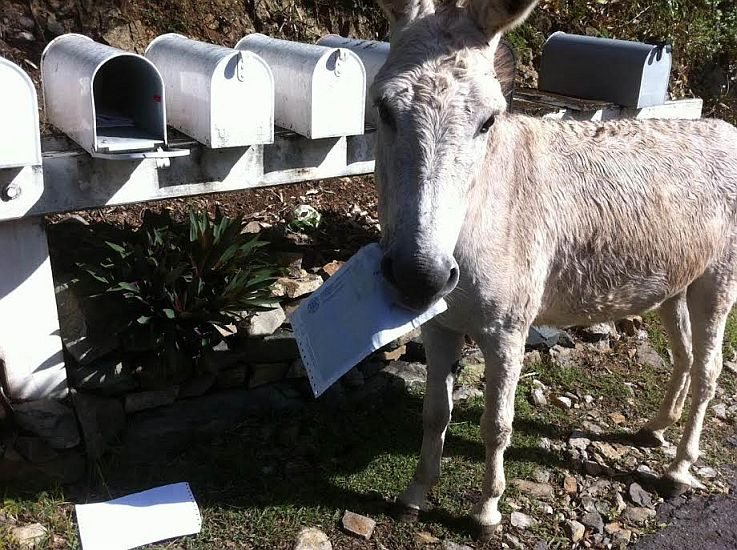 The Donkey ate my WAPA Bill